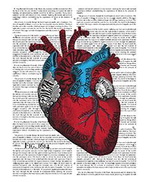 Allison Rocha: Fig1614 Through the Heart
